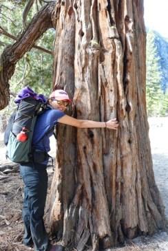 Love the big fellows! Tree hugger.