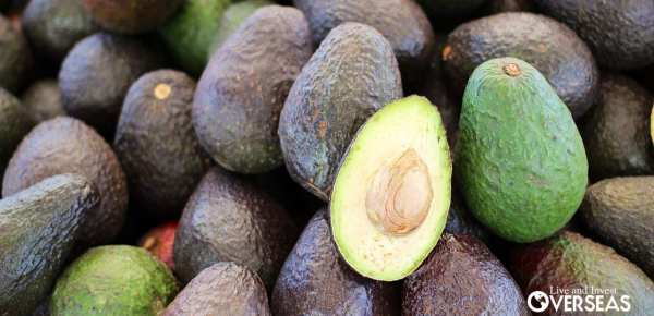 Holy Guacamole! New Organic Avocado Plantation In Panama