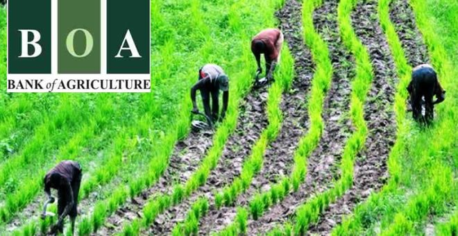 APPLICATION REQUIREMENT AND LOAN PROCEDURE FOR BANK OF AGRICULTURE