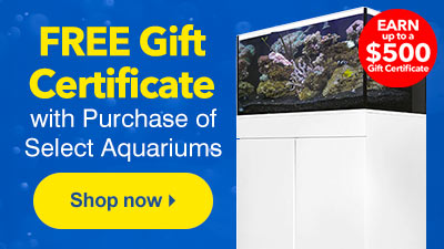 liveaquaria quality aquarium fish