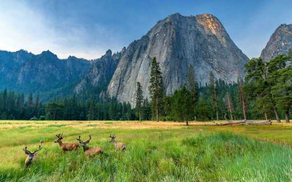 Deer sitting in front of Half Dome in Yosemite National Park