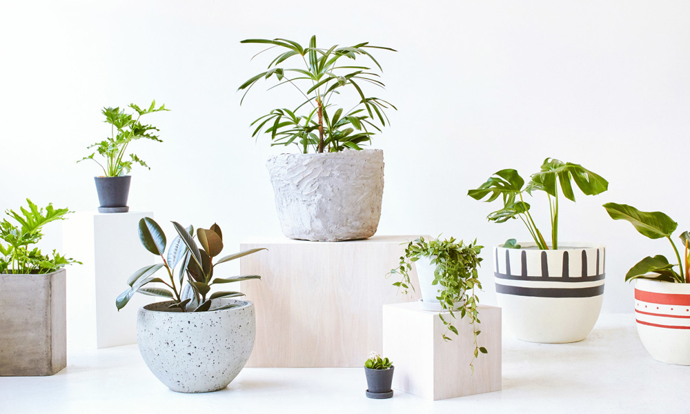 Demand for Indoor Plants in Modern World