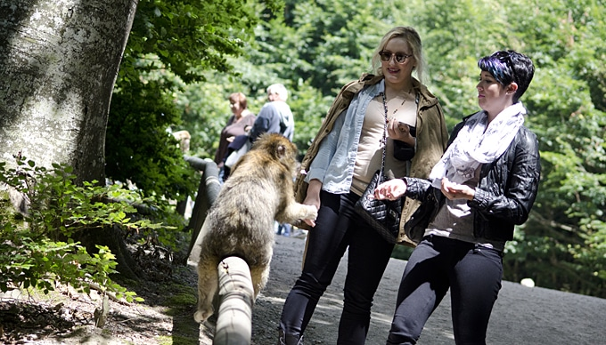Monkey Mountain Germany