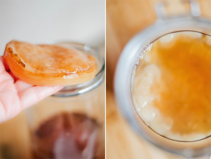 How to make homemade kombucha recipe holding a kombucha SCOBY mother