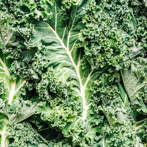 Closeup photo of kale leaves