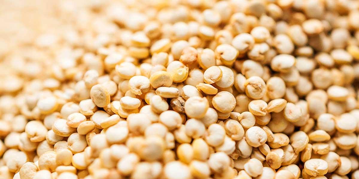 Close up photo of quinoa