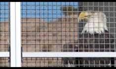"Watch: Thollem ""Freedom Hoarders"""
