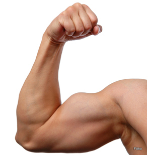 How Much Muscle Do You Lose As You Age