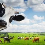 Il Marchio QV anche a formaggi e prodotti lattiero-caseari