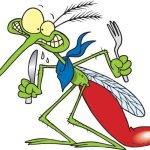 Lotta alle zanzare: la campagna del Comune. Cosa possono fare i cittadini