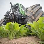 Regione Veneto, 200 euro ad ettaro per coltivare barbabietole
