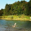 Sommer in Untergiesing Isar Ente