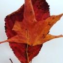 Windspiel aus Naturmaterialien Abstandshalter Drahtschlaufe Detail