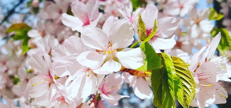 #darumgrüner: Im Frühling mehr Achtsamkeit im Alltag trainieren