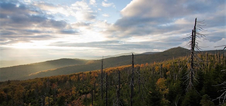 Waldzeit e.V. nachhaltig Urlaub machen im herzen des Nationalpark Bayerischer Wald