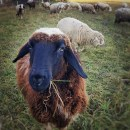 Nachhaltige Winterjacke aus Wolle Schaf