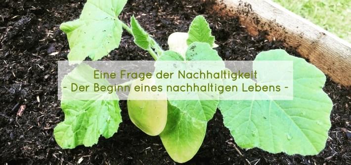 Nachhaltig leben und der grüne Samen