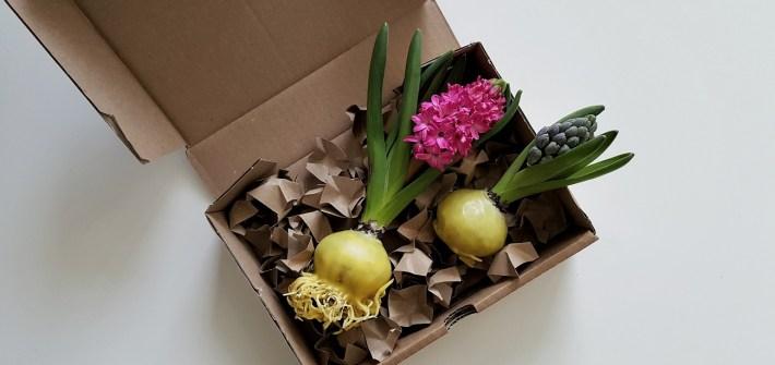Frühlingsblumen in Wachs: DIY-Frühlingsgrüße aus Tulpen, Hyazinten und Narzissen zum Verschenken