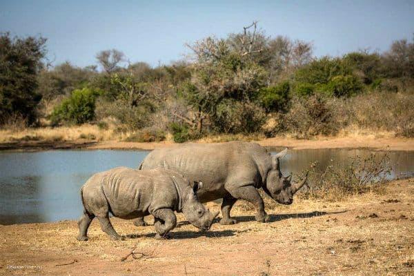 Just One Rhino Campaign