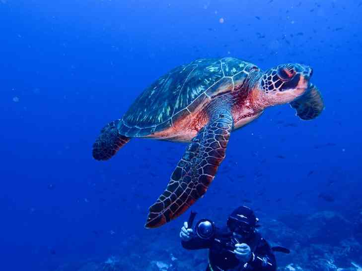 Scuba Diving with Turtles in the Galapagos