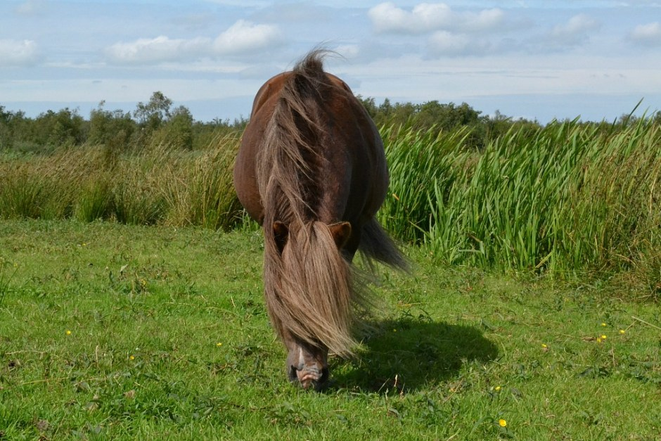 Pony-Alde-Feanen
