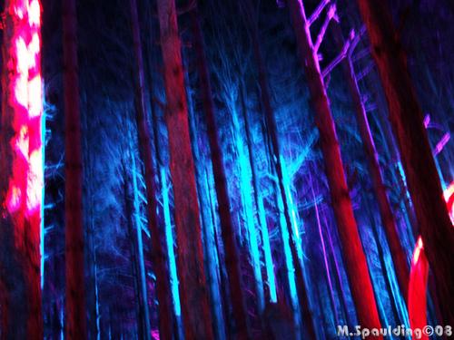 rothbury forest