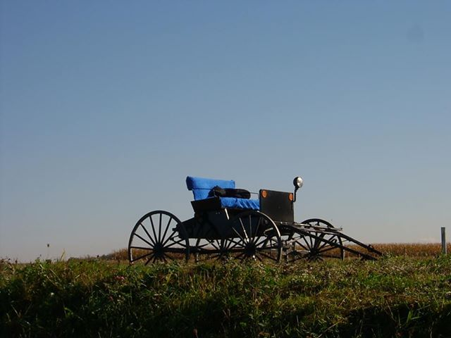 Ruth Curfman - Amish Buggy
