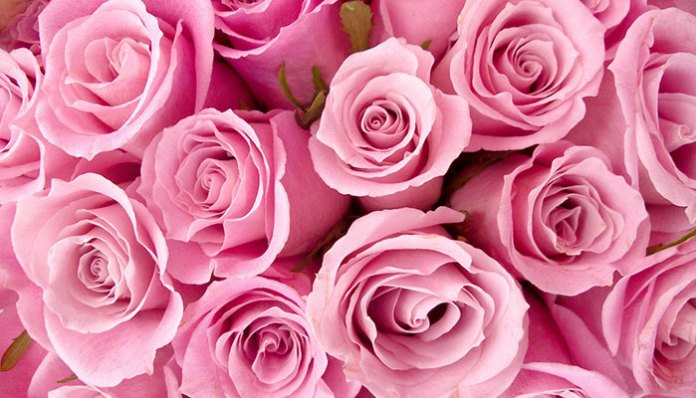 rose-day-your-first-step-to-love-week-pink-rose