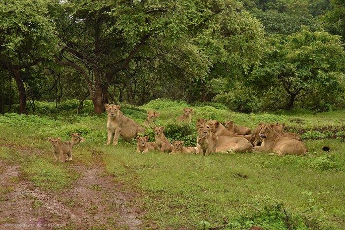 Gir National Park Sanctuary