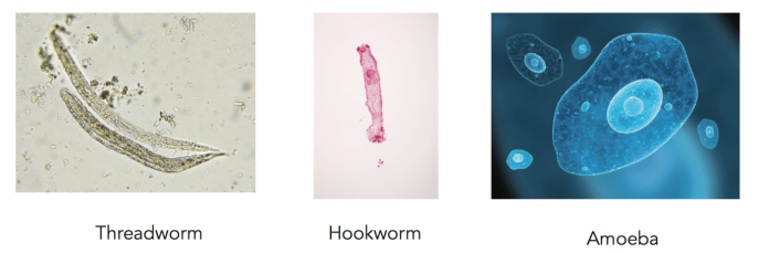Types of Intestinal Worms, Worms in Human poop Pictures