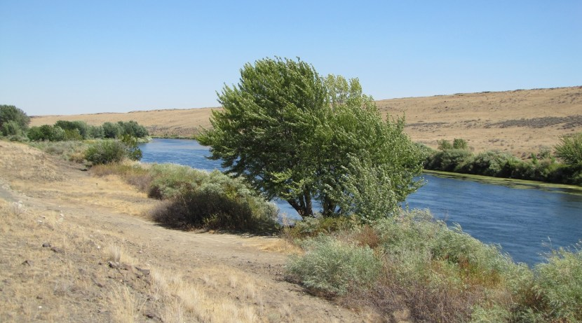 Tree near some of the sighting places (flying lights), Yakima River, Washington state