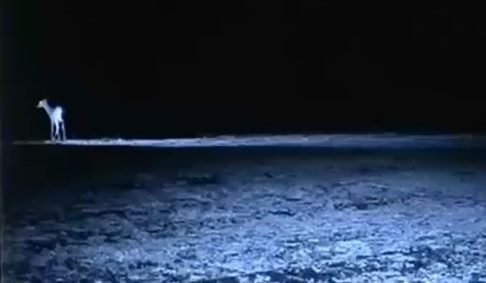 Possible bioluminesce in a flying predator?