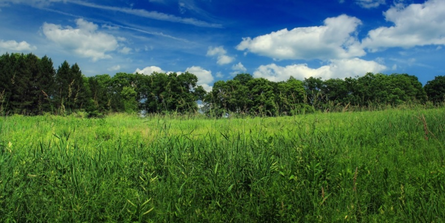 A meadow or field in Pennsylvania