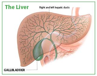 Gallbladder  Example