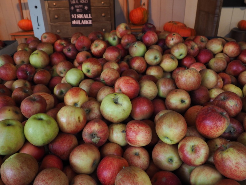 Apple Picking Gordon Skagit Farm
