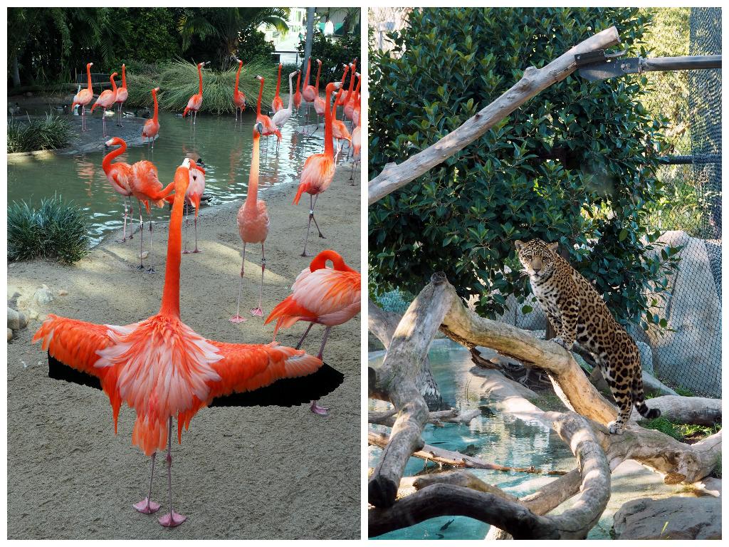 San Diego Zoo - LiveRecklessly.com