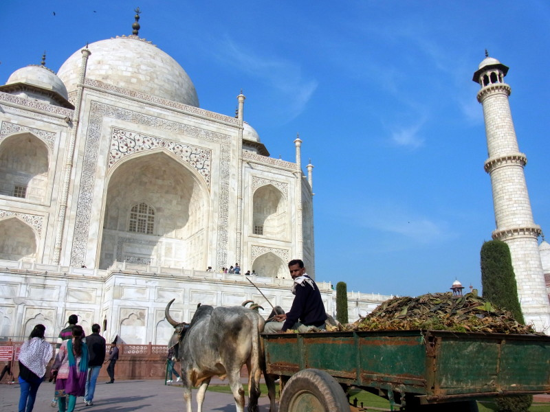 Photos to fall in love with India: The Taj Mahal at a different angle - LiveRecklessly.com