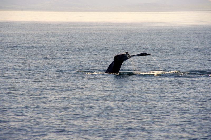 Whale Watching in the San Juan Islands - LiveRecklessly.com