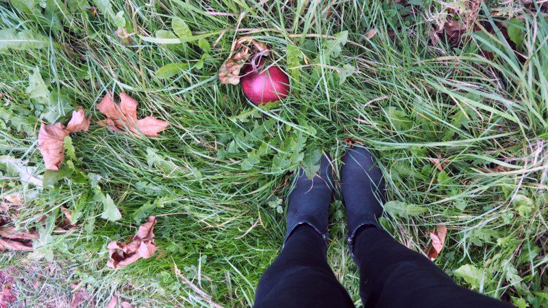 Apple picking at BelleWood Acres, Washington - LiveRecklessly.com