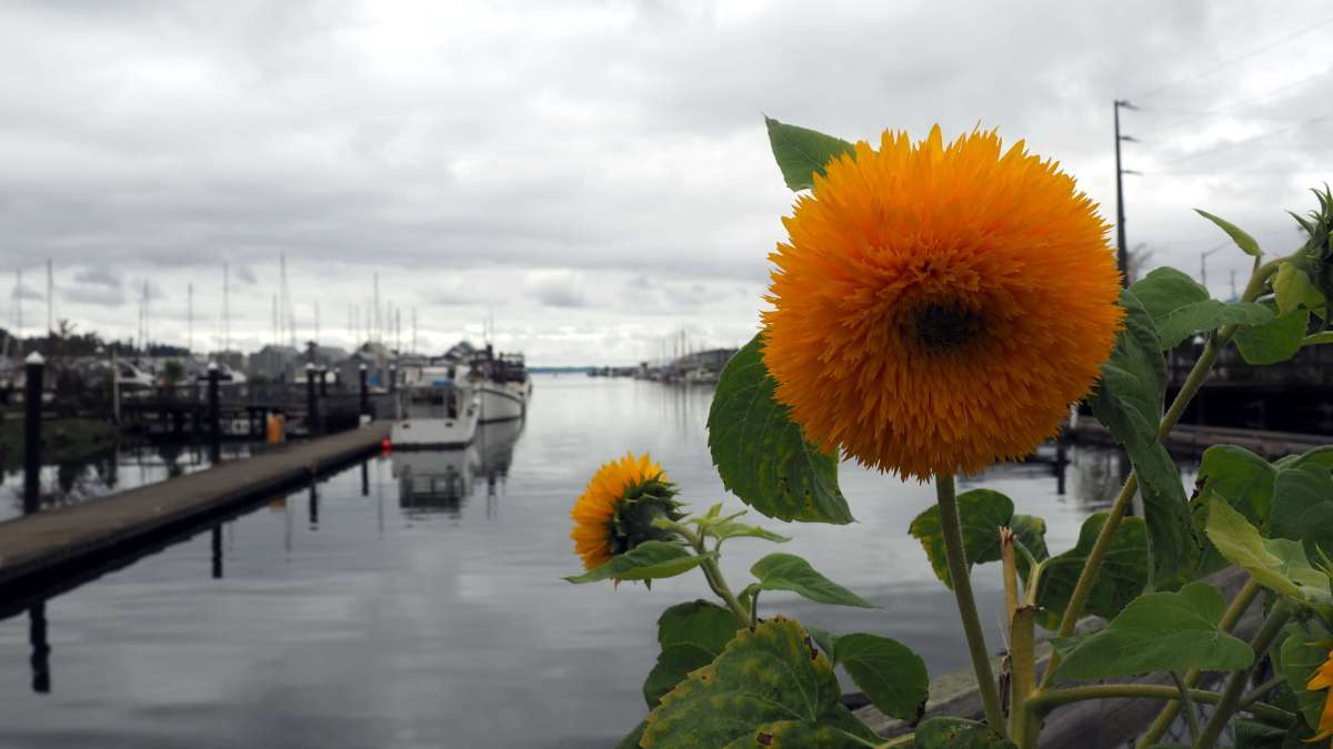 Marina in Olympia - Exploring town on a rainy weekend in Olympia, Washington's funky capital city - LiveRecklessly.com