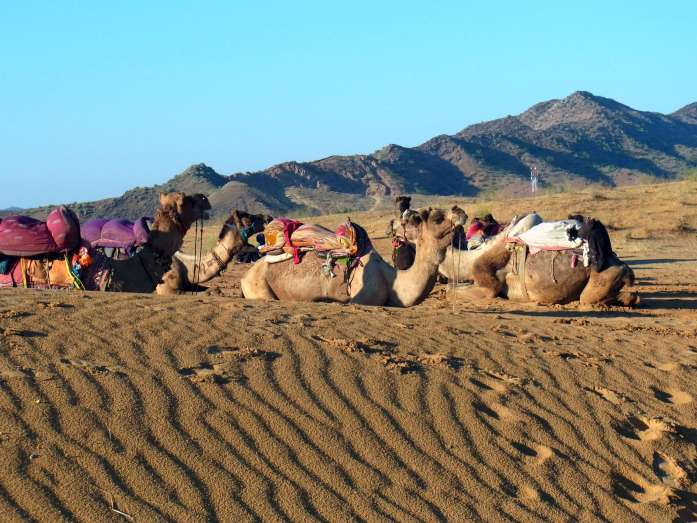 Why I prefer off season travel - LiveRecklessly.com Pushkar camel safari - LiveRecklessly