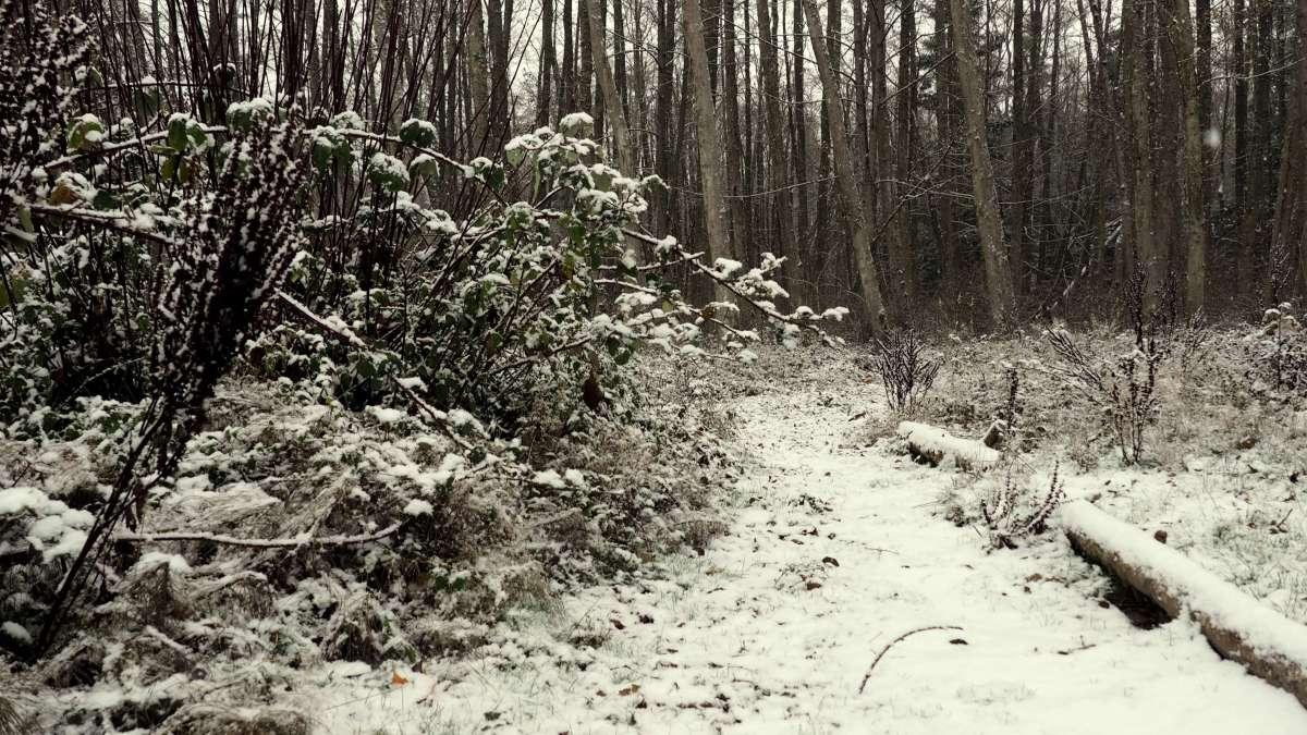 Volunteer Park in the snow. Snow in Anacortes - liverecklessly.com