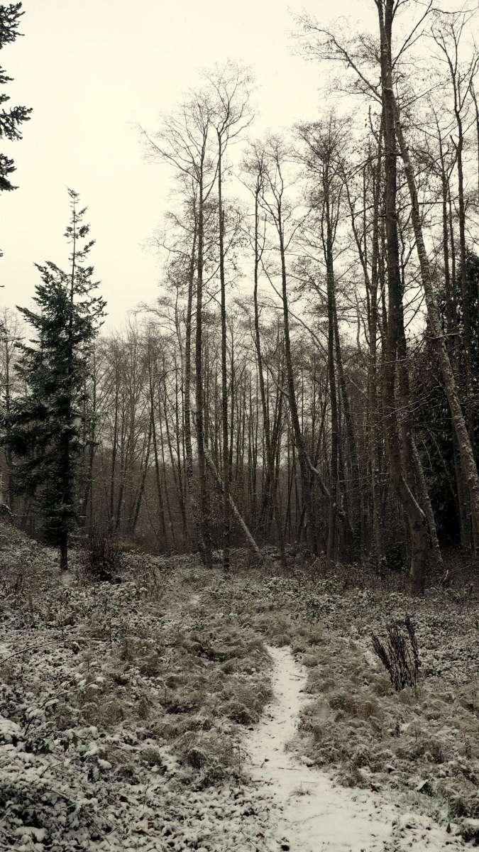 Volunteer Park trails Snow in Anacortes - liverecklessly.com