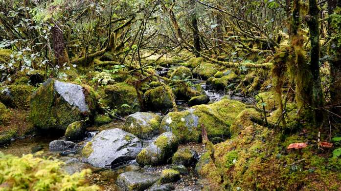 Alaska in Photos - Tongass National Forest - Live Recklessly