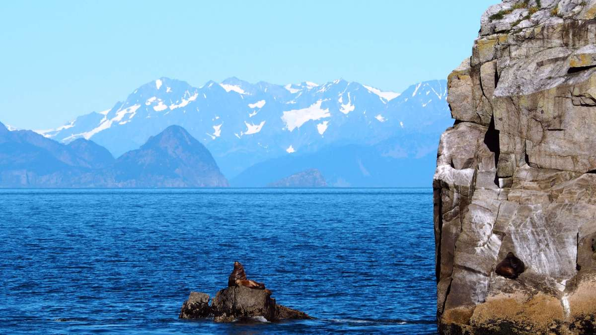 Alaska in Photos - sea lion in Kenai Fjords National Park - Live Recklessly