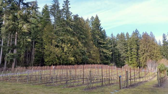 Spoiled Dog vineyard - Red wine and chocolate overload on the Whidbey Island Wine Trail - LiveRecklessly.com