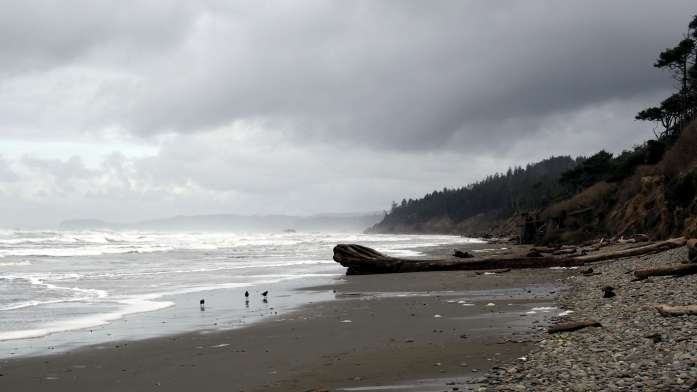 Birds on the beach - An Olympic National Park road trip Washington - Live Recklessly