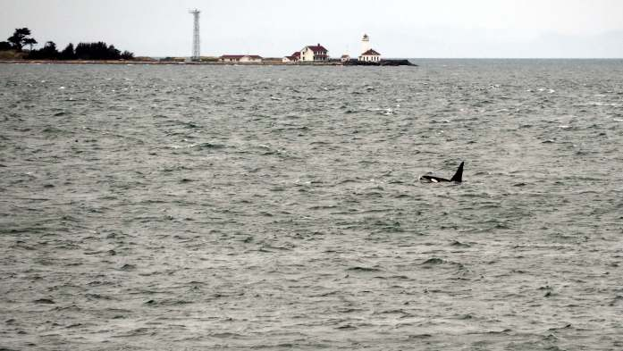 Orcas on an Olympic National Park road trip - Live Recklessly