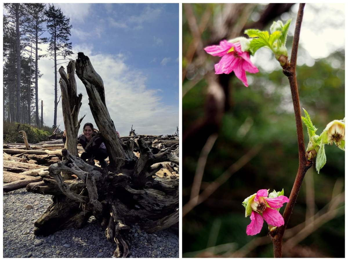 Ruby Beach Washington driftwood and flowers - An Olympic National Park road trip - Live Recklessly