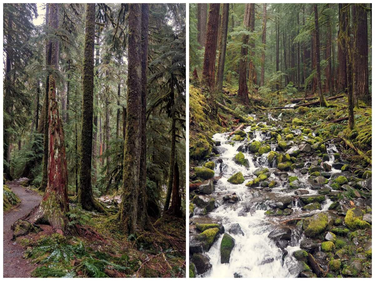 Sol Duc Falls collage An Olympic National Park road trip - Live Recklessly